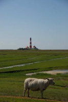 2008 Nordsee 074