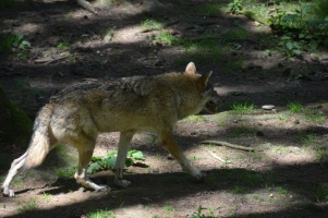 2014 Wildpark Poing 009