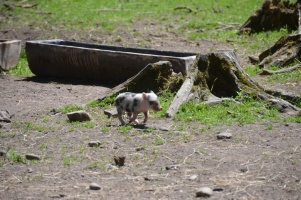 2014 Wildpark Poing 022